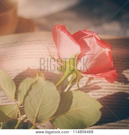 Pink Rose And Book  On Table In Sunlight, Soft Focus. Valentines