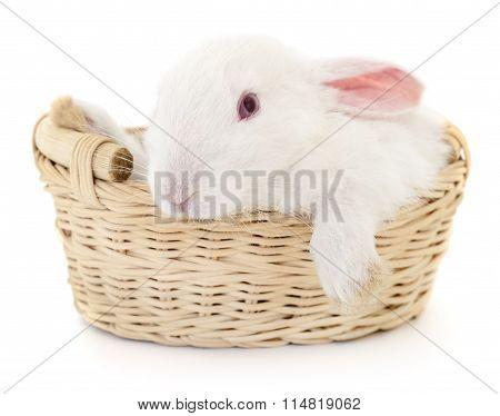 Rabbit In Basket