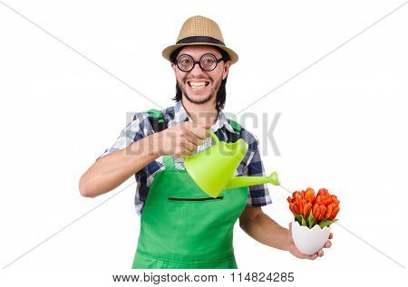 Young funny gardener with tulips and watering can isolated oin white