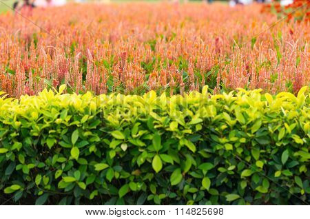 Background Of Decorative Ornamental Gardens