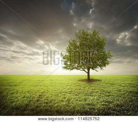 Lonely tree in green field