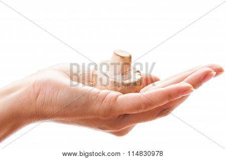 Female Hand Holding A Mushroom.