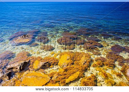 Transparent Bottom With Stones And Algae Of The Black Sea.