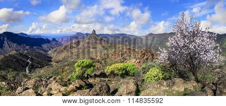 beautiful nature of Gran Canaria - panoramic view with Roque Ben