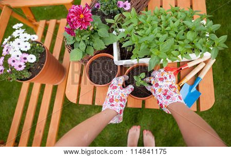 Gardening concept, barefoot woman potting flowers