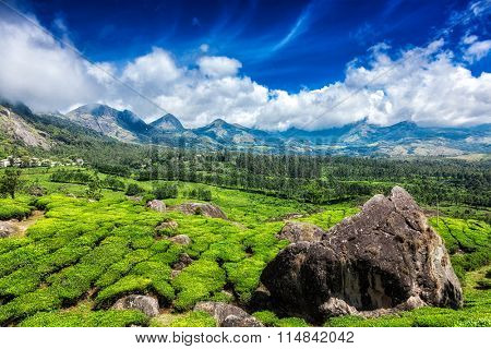 Green tea plantations with blue sky in mountains. Munnar, Kerala