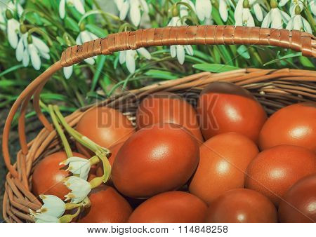 Easter Eggs In A Wicker Basket And Snowdrops.