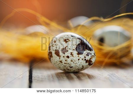 Quail Egg, Closeup On Wooden  Background