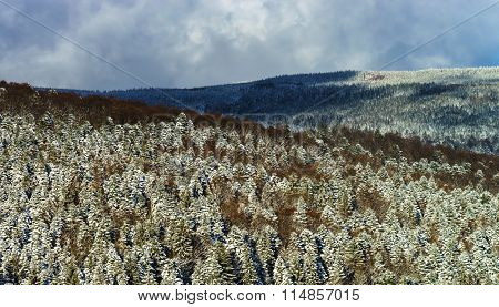 Beautiful Slope Of Hill With Winter Trees In Snow