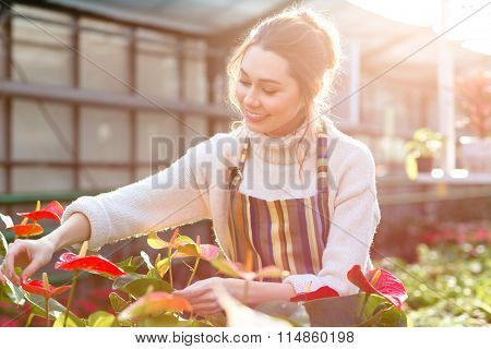 Happy pretty young woman gardener taking care of anthuriums in garden center