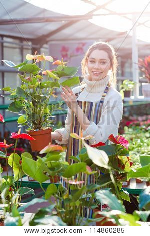 Smiling cute young woman gardener in striped apron holding flower pot with anthuriums in orangery