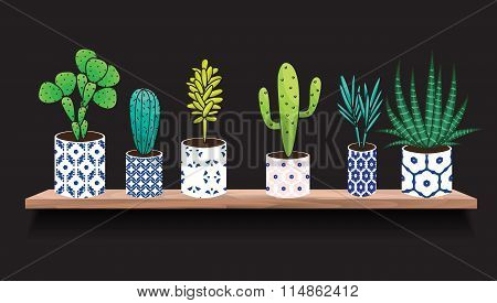 Succulents and cactus plants in pots.