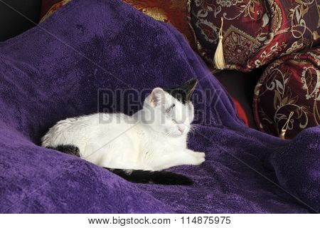 Cozy Cat Kitty Napping Happy