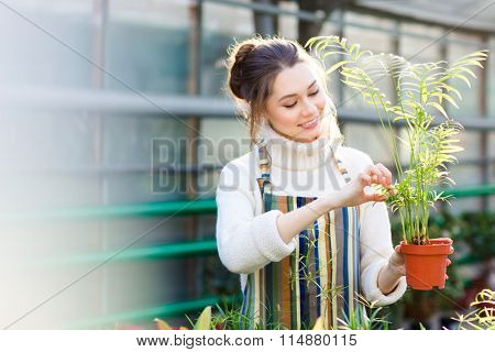Cheerful pretty young female gardener in white sweater and striped apron taking care of small palm in pot in greenhouse