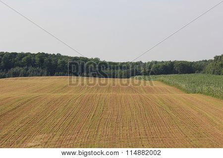 Farmland in Northern Michigan