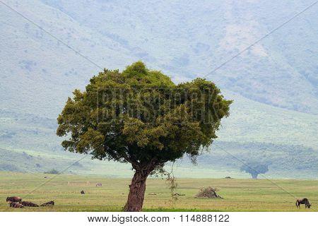 Savannah Landscape In Ngorongoro