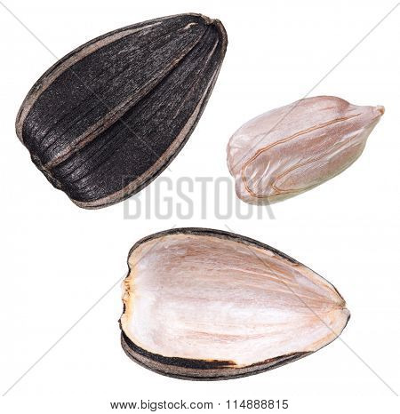 Set of perfect sunflower seed isolated on white background