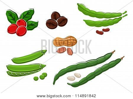 Assorted fresh cartoon legumes and nuts