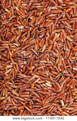 Uncooked Long-grain Red Kernel Rice