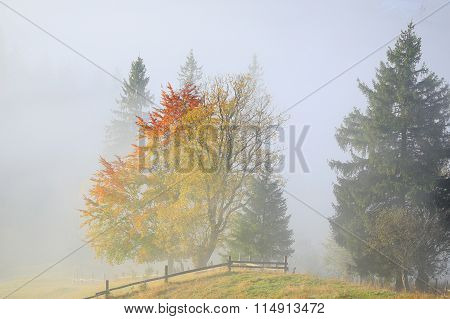 Golden Fall. Autumn Trees In The Fog