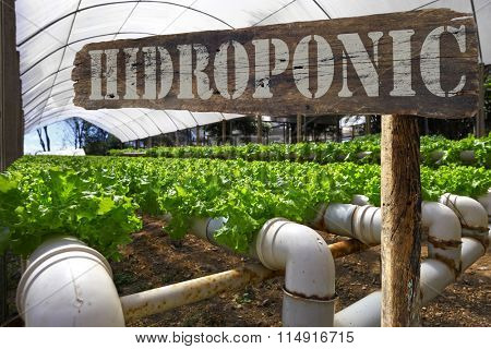 Planting signpost hydroponic