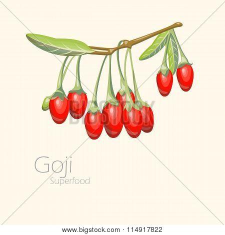 Illustration of goji berries. Fresh fruit background.