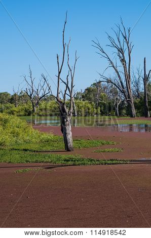 Outback River