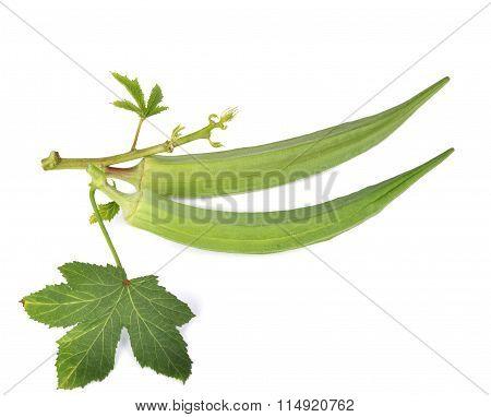 Fresh Okra Or Green Roselle On White Background.