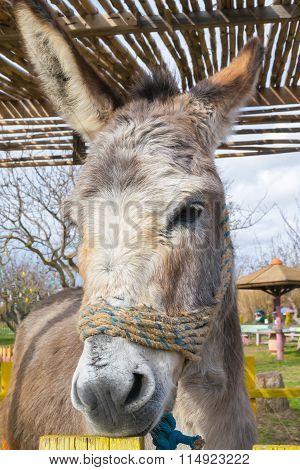 Close up of a donkey at a park