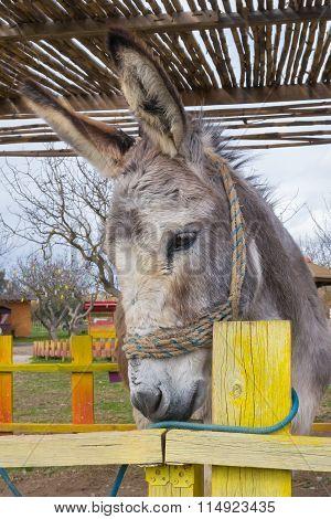 Close up of a cute donkey.