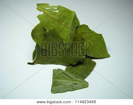 Dry laurel leaves