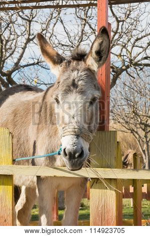 Beautiful portrait of a donkey at a park.