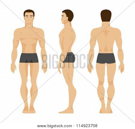 Male Anatomy. Vector Illustration