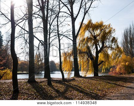 Trees On The Lake Shore