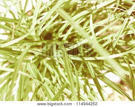 Retro Looking Grass Meadow Weed