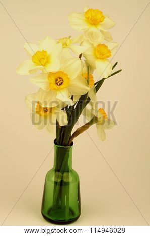 Yellow Daffodils Bunch