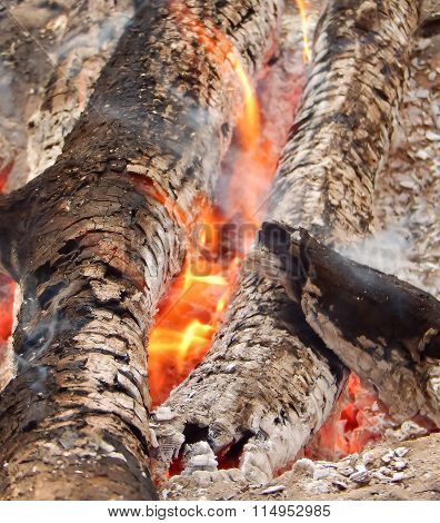 Ashes of burning logs in fire closeup