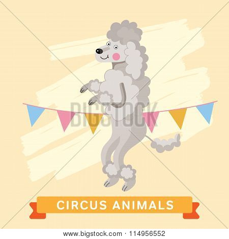 Circus Dog, vector animal series.