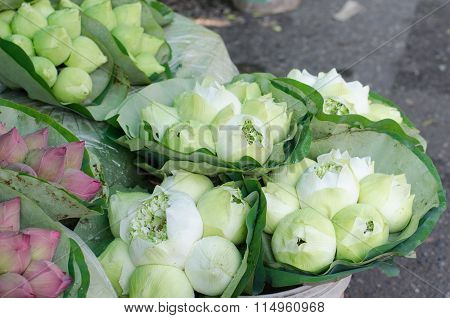 Fresh Lotus Bud Bouquet In Flower Market (pak Klong Talad, Thailand)