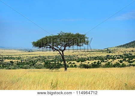 The Tree In The African Savanna