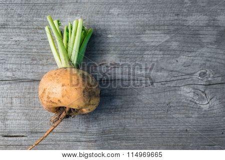 Yellow turnip, top view