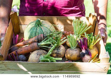 Freshly harvested unwashed vegetables