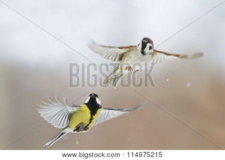 Sparrow and bird in flight
