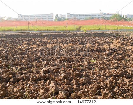 the Soil Of The Crop