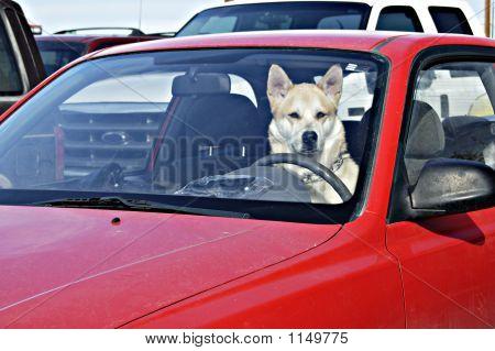 Designated Driver 1