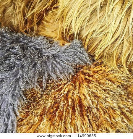 Assortment Of Sheepskin Of Different Colors