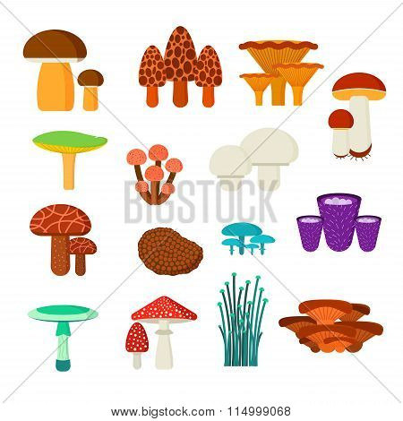Mushrooms vector illustration set
