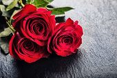 Постер, плакат: Rose Red roses Bouquet of red roses Several roses on Granite background Valentines Day wedding