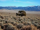 stock photo of sagebrush  - A long valley of sagebrush with blue mountains behind - JPG