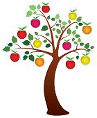 pic of apple tree  - vector apple tree with fruits - JPG